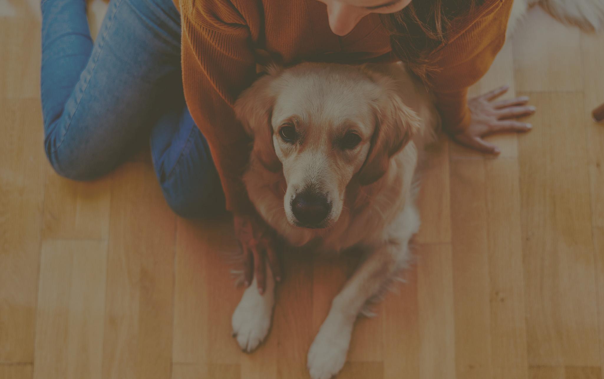 Proprietaire d'un chien